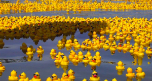 A river full of rubber ducks