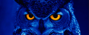 An owl - get 6 month smiles in north london from Blue Light Dental Clinic